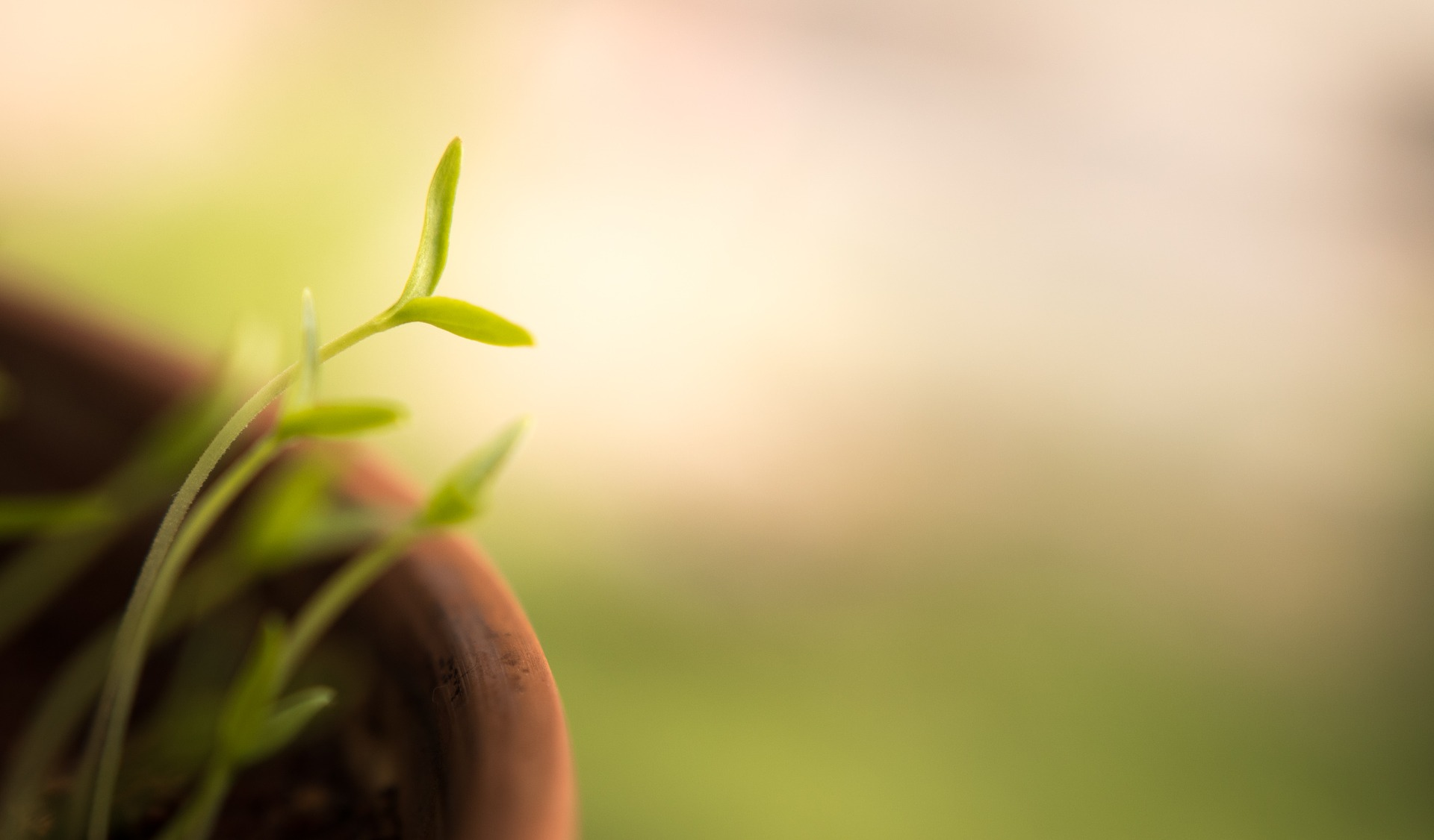 Fresh Growth (Plant Growing)